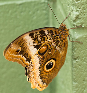 Butterfly Wonderland Scottsdale 4 July 2014   007
