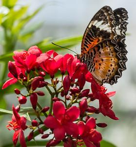 Butterfly Wonderland Scottsdale 4 July 2014   009