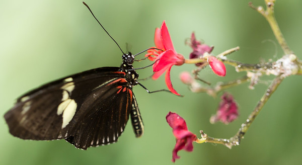 Butterfly Wonderland Scottsdale July 2014