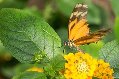Butterfly Wonderland Scottsdale 4 July 2014   018