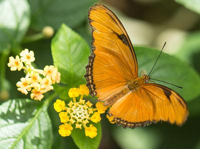 Butterfly Wonderland Scottsdale 4 July 2014   026