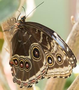 Butterfly Wonderland Scottsdale 4 July 2014   005