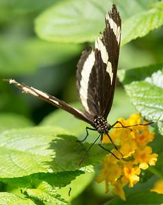 Butterfly Wonderland Scottsdale 4 July 2014   014