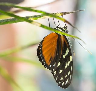 Butterfly Wonderland Scottsdale 4 July 2014   006