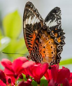 Butterfly Wonderland Scottsdale 4 July 2014   010