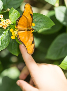 Butterfly Wonderland Scottsdale 4 July 2014   025