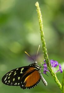 Butterfly Wonderland Scottsdale 4 July 2014   021