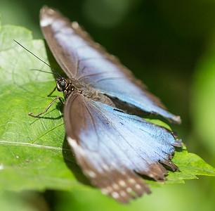 Butterfly Wonderland Scottsdale 4 July 2014   024