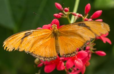 Butterfly Wonderland Scottsdale 4 July 2014   011