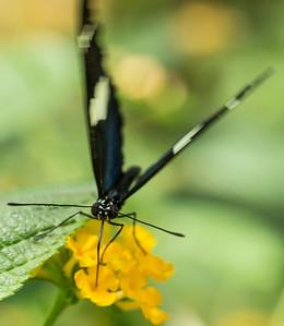 Butterfly Wonderland Scottsdale 4 July 2014   012