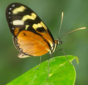Butterfly Wonderland Scottsdale 4 July 2014   003