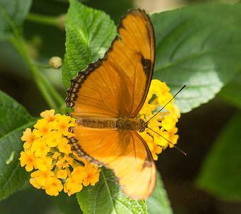 Butterfly Wonderland Scottsdale 4 July 2014   027
