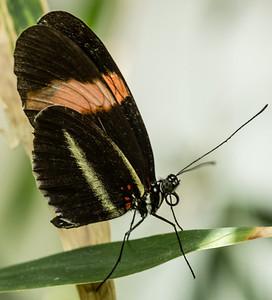 Butterfly Wonderland Scottsdale 4 July 2014   016