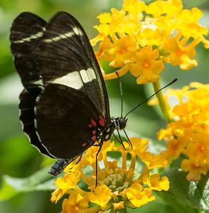 Butterfly Wonderland Scottsdale 4 July 2014   015