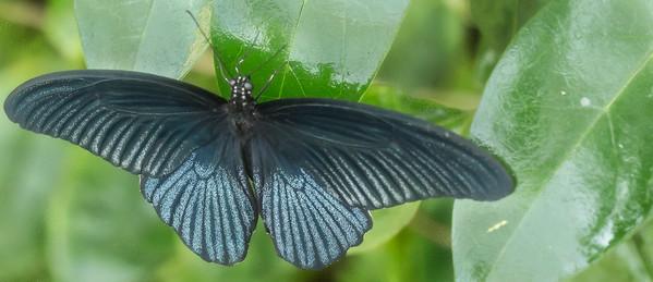 Butterfly Wonderland Scottsdale 4 July 2014   004