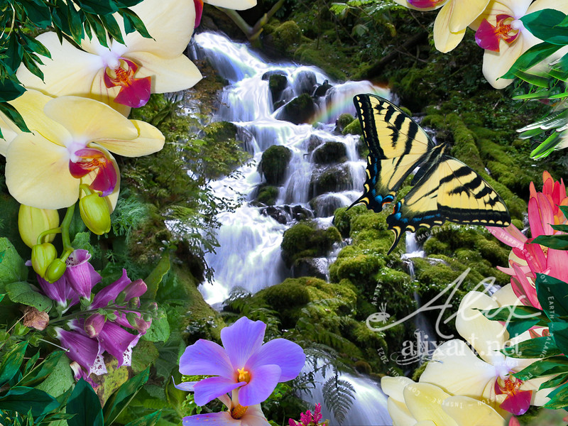 tropical mossy swallowtail
