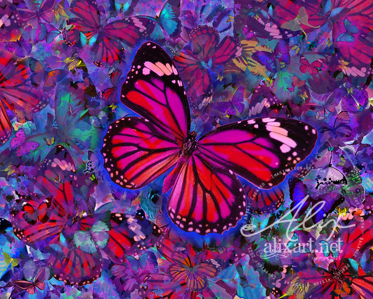 Butterfly Red Explosion