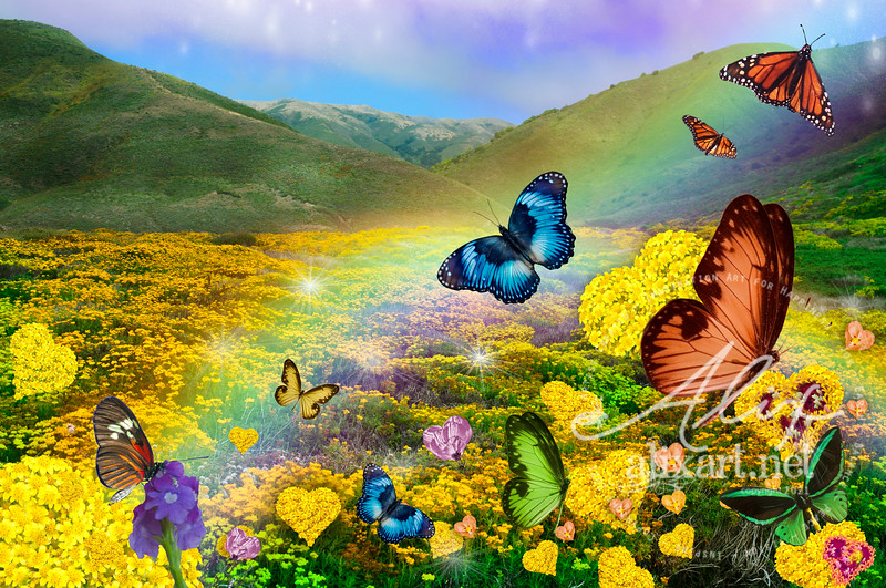 field of Love-Flowers _butterfly