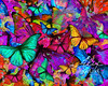 Rainbow Butterfly Explosion
