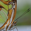 Butterfly Close-Up Photo