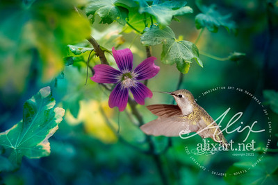 purple flower hummingburd
