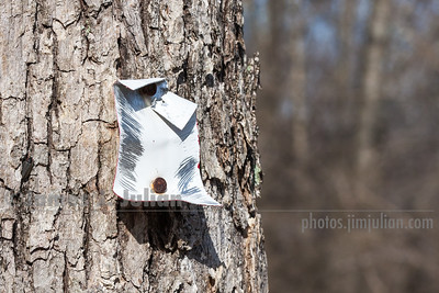 Bent White Trail Marker Nailed to a Tree