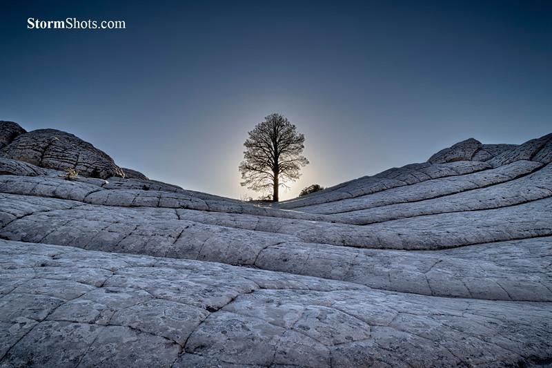 Lone Tree - White Pocket - Vermilion Cliffs - Arizona