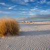 Lonely Dune Grass Tuft - White Sands New Mexico