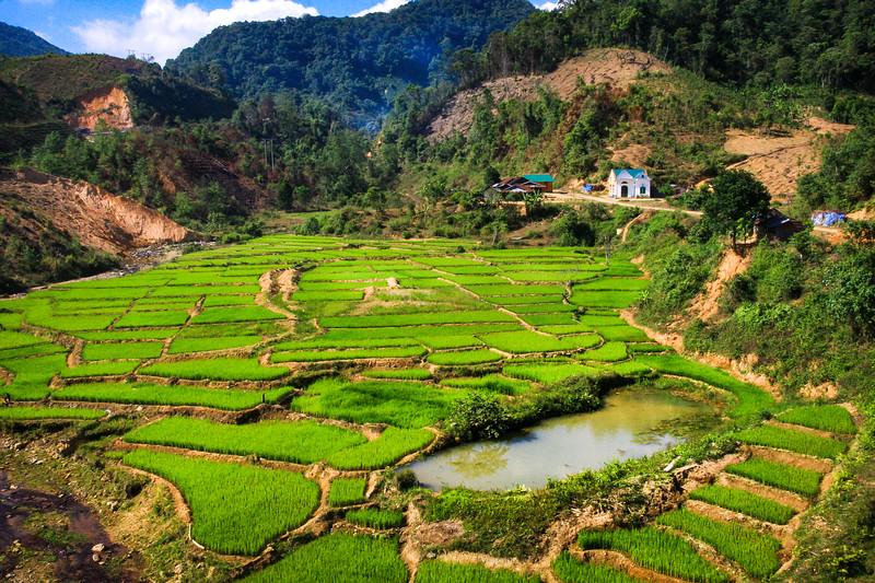 Green Vietnamese Highland Paddy Fields