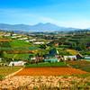 Vietnamese Farmland