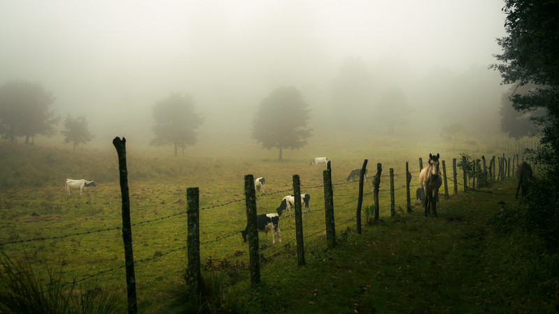 Horse Tied Up in a Foggy Field