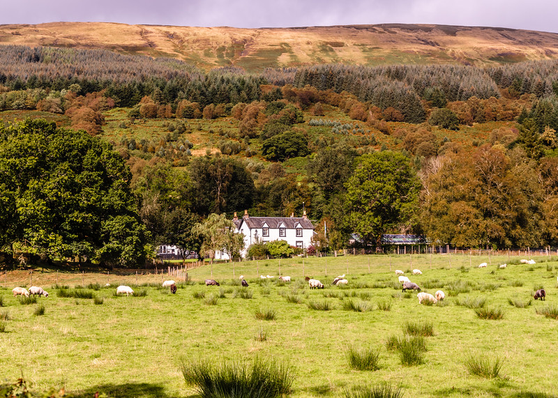Scottish Lowland Cottage