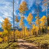Sky High Aspens - County Road 5 - Ridgeway - Colorado