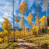 Sky HIgh Aspens - County Road 5 - Ridgeway - Colorado