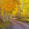 Aspen Glow - County Road 5 - Ridgeway, Colorado