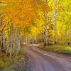 Aspen Glow - County Road 5 - Ridgeway, Colorado