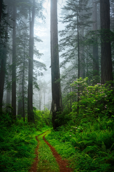 Road of the Redwoods
