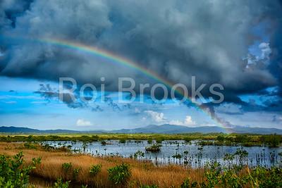 Rainbow over the wetlands