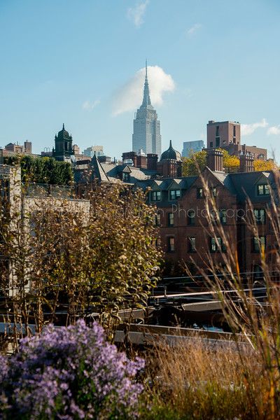 Trees, plants and views of Manhattens West Side from The Highline, a raised park on a disused elevated train line, New York City, USA