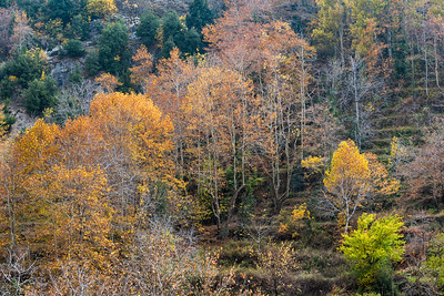 Tannourine Tahta in Fall
