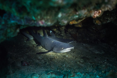 Sharks hiding in the cave