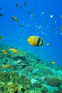 Colourful fish of Crystal Bay