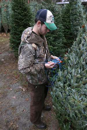 Buying Christmas Trees in Westford