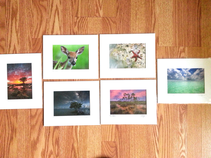 All prints are framed and matted using acid-free products to ensure long lasting art.  These 8x10 sizes sell from $25 plus shipping