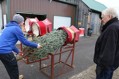 Buying a Christmas Tree at Sholan Farms Leominster