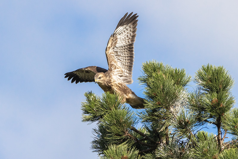 The first venture out of the nest to stretch its wings
