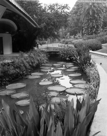 "Botanic Gardens | August 2017 - f22 @1/4"""