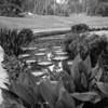 "Botanic Gardens | August 2017 - f22 @ 1/4"""