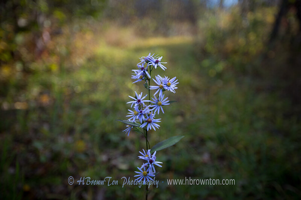 Lone wildflower along the trail...