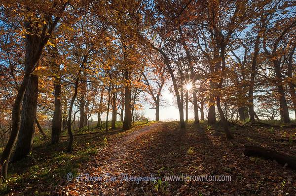 A Warm Autumn's Path